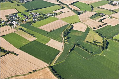 Landscape - Degraded bocage_hedgerows have been removed, mostly crops